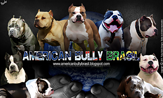 American Bully Brasil - Esta raça merece!