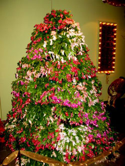 Mindless mirth unique ways to show your holiday spirit - Tips to care for a natural christmas tree ...