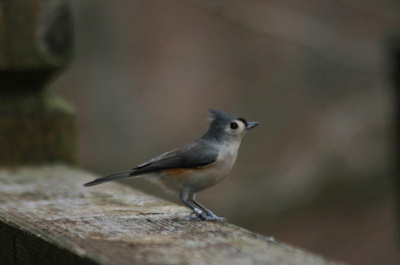 do you feed birds do you bird watch are you a beginner or an