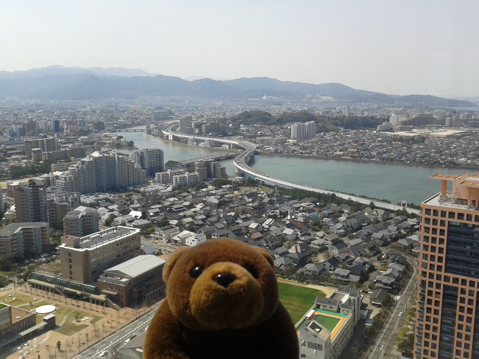 Teddy on top of Fukuoka tower