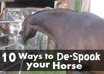 10 Ways to De-Spook Your Horse