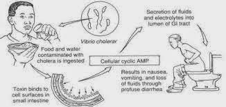 Bahaya Penyakit Kolera