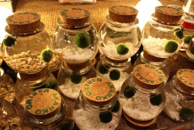 Salt And Vinegar Marimo What S So Great About It Vs Moss Terrarium