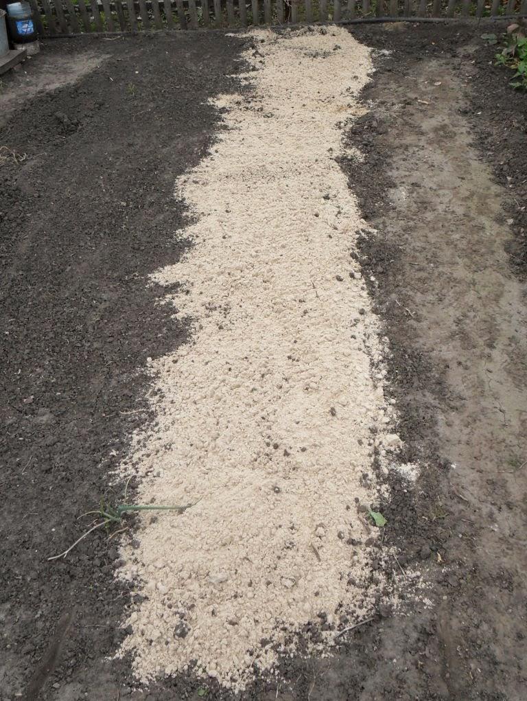 Внесение песка перед перекопкой грядки под чеснок