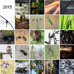Adventskalender 2015
