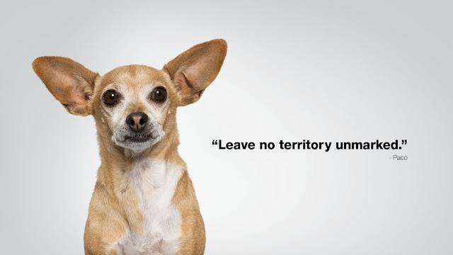 Paco, Subaru Dog Tested. Dog Approved.™, #SubaruBP