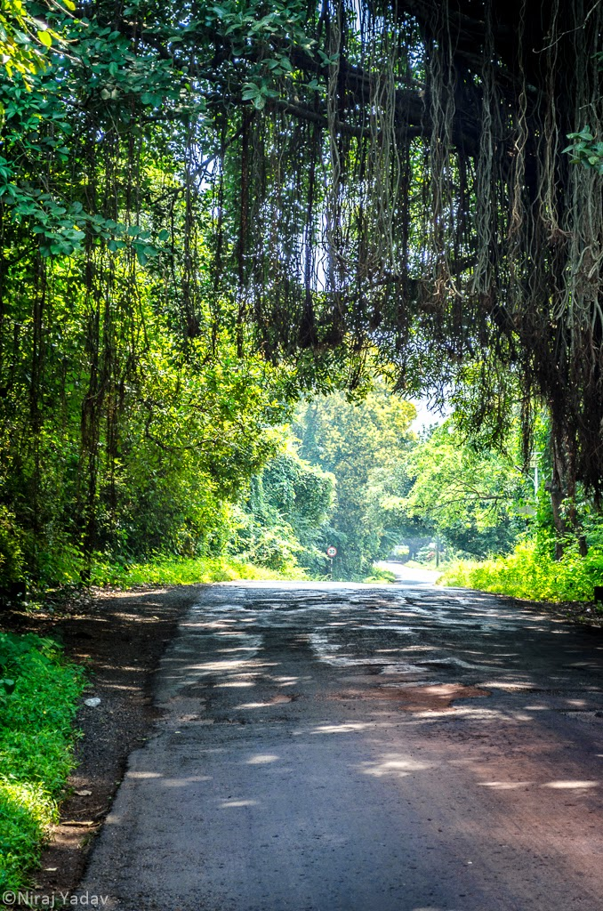 bike trip to konkan, scenic roads, tree canopy