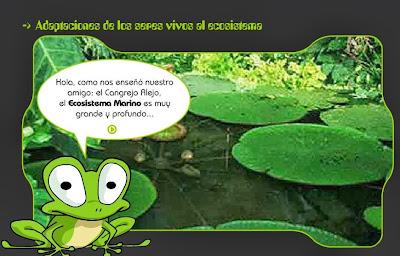http://evol-adaptation.weebly.com/uploads/4/6/1/4/4614054/adaptacion_seres_ecositema.swf