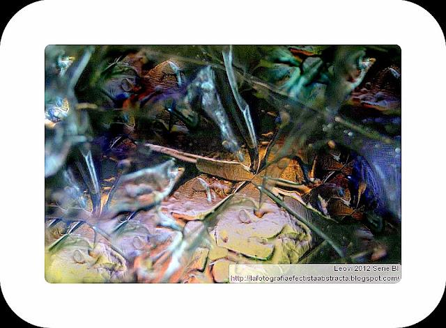 Foto Abstracta 3386  El jardín de los sinsabores - The garden of the chagrins