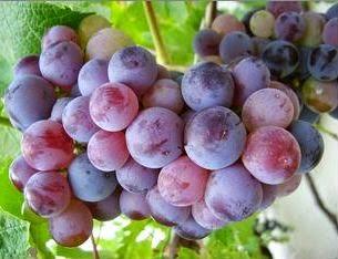 Manfaat buah anggur, anggur untuk kesehatan