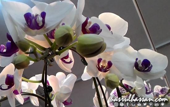 Orkid Cantik di Festival Royal Floria Putrajaya 2015