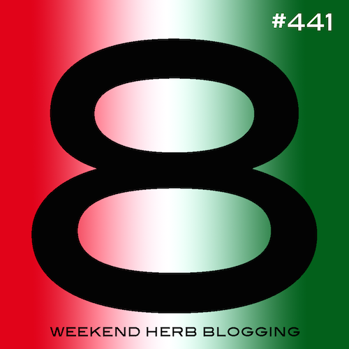 Weekend Herb Blogging #441 Hosting