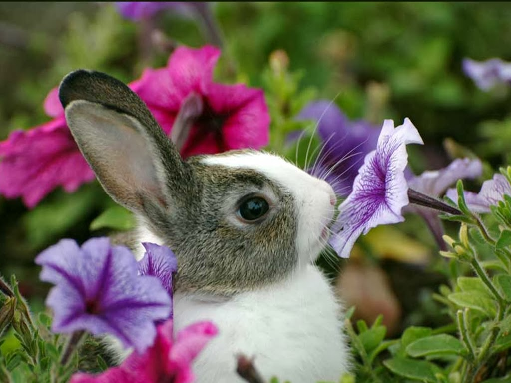 Bunny And Flowers Wallpaper