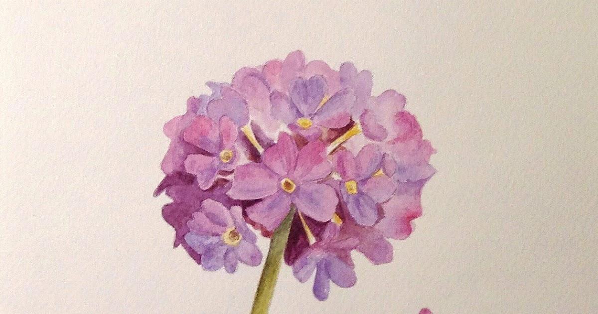 Schilderijen van orchidee n en andere bloemen primula 39 s for Schilderijen van bloemen