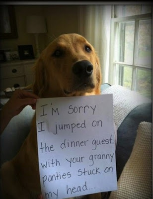 Funny Dog Shame Granny Panties Picture Sorry Jumped The