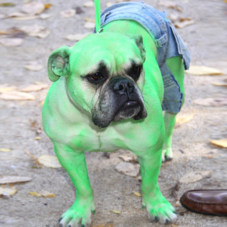 http://www.dailymail.co.uk/news/article-1323623/Halloween-dog-costumes-Pooches-dressed-impress-annual-parade-NY.html#ixzz3HdDF4ZOo