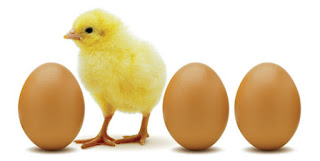 huevos pollitos gallinas