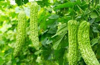 pare medicinal plants