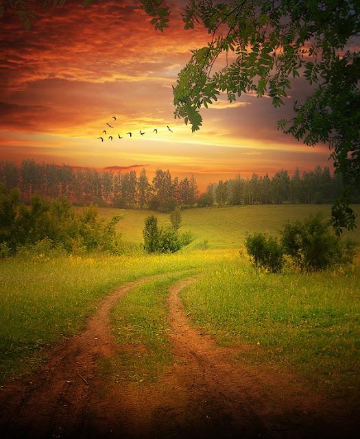 Autumn flight of birds