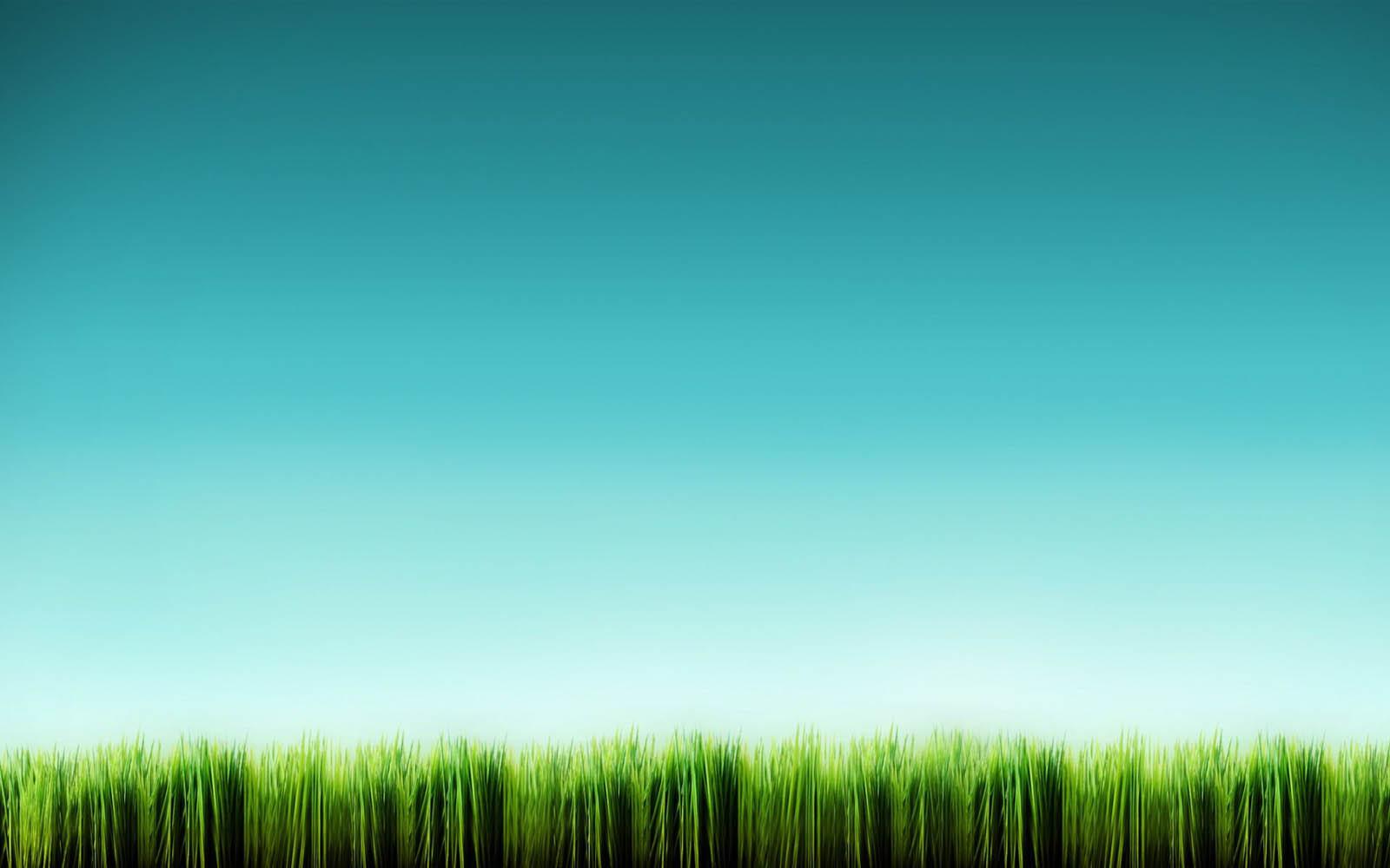 Wallpapers  Tall Grass Wallpapers