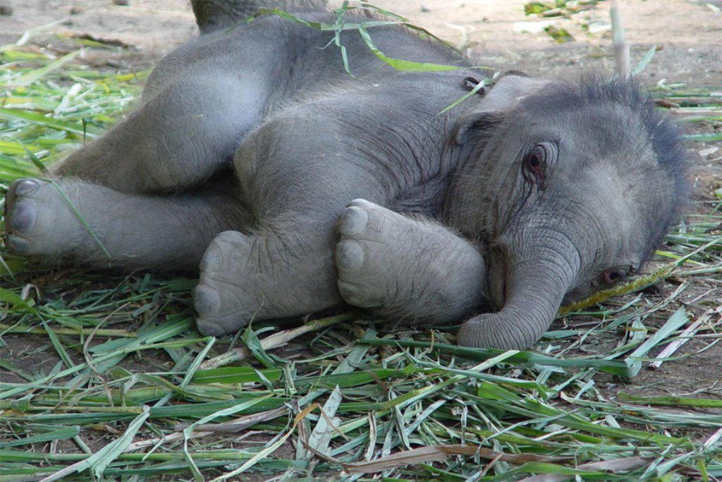 Animals Plants Rainforest Baby Elephant Pictures, Weight