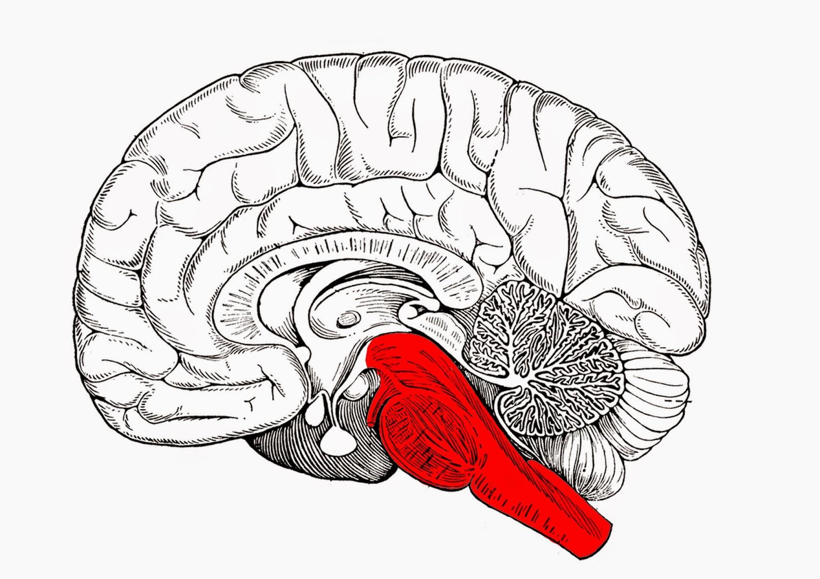 Encefaloguía para neuromarketers - Brain and Marketing