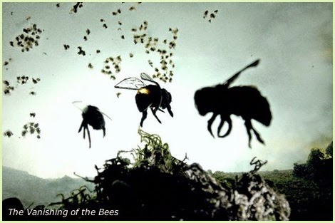 bees disappearing
