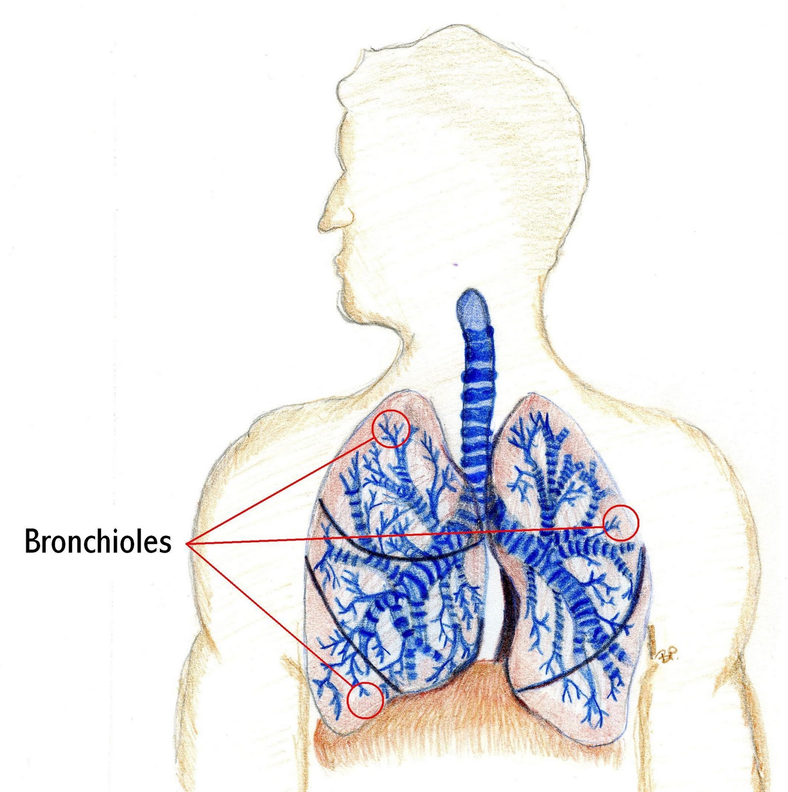 bronchiolitis in infants and small children There is also no consensus surrounding the propriety of enteral nutrition in infants with bronchiolitis  in a small trial ( n = 14  in children with.