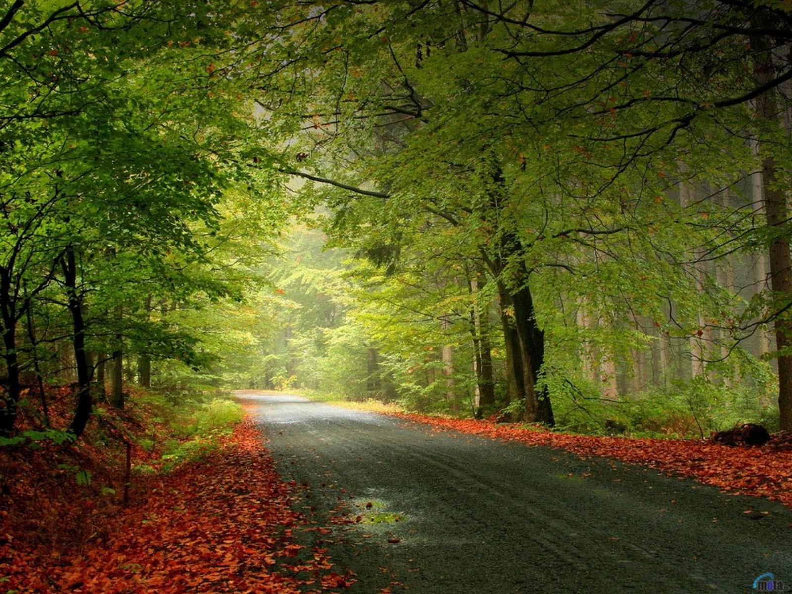 http://2.bp.blogspot.com/-6j7B83IZFFs/Ta7CcPQJVqI/AAAAAAAADHw/ZcNcxin3pwg/s1600/carretera+en+bosque+frondoso.jpg