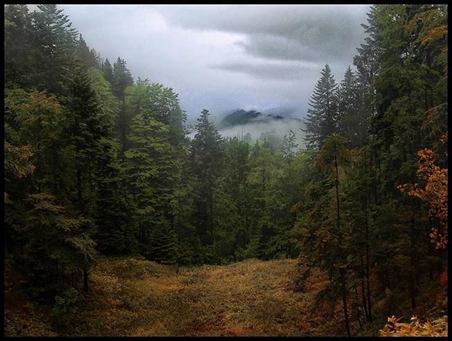 autumn mist fog