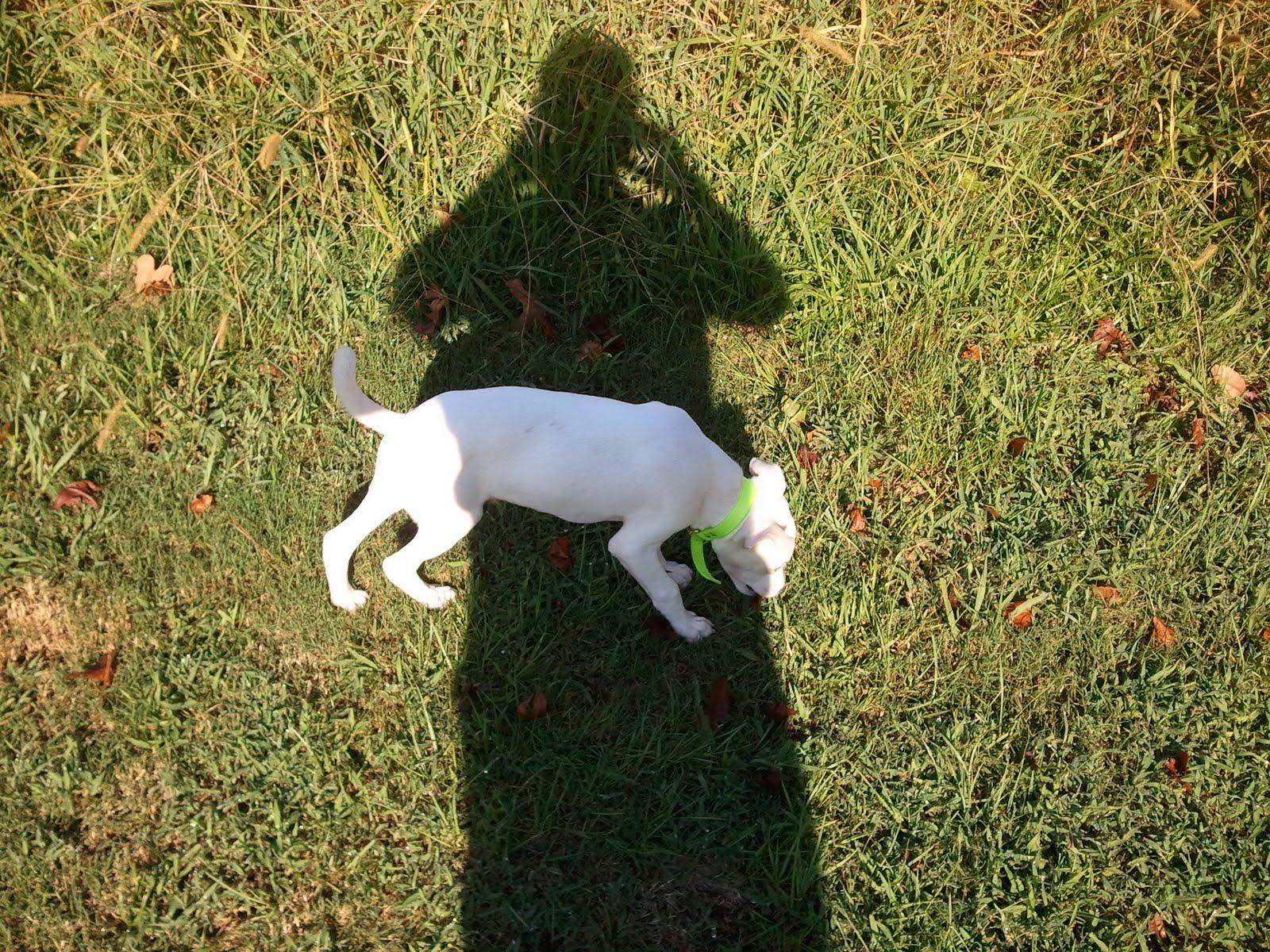 Galla Feist--Squirrel Dog Hunting Photo Gallery: Zach ...