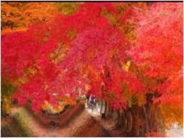 Tempat Wisata di Jepang | Wisata Dunia