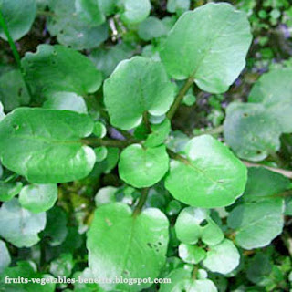 benefits_of_eating_watercress_fruits-vegetables-benefits.blogspot.com(10)