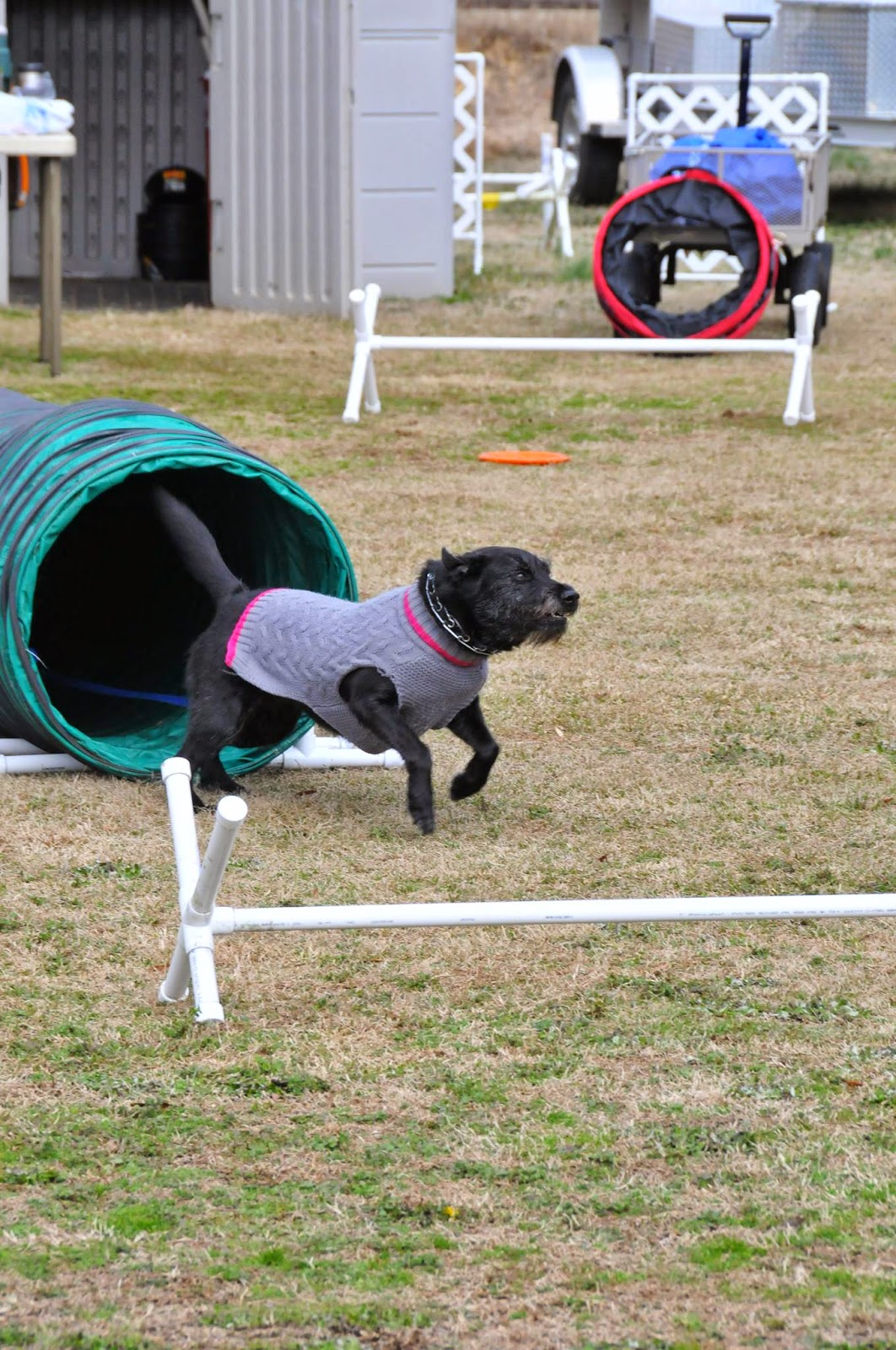 at dog agility training