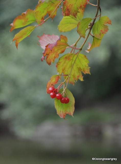 Autumn in the forest, Frankfurt