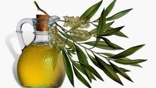 Manfaat Minyak Pohon Teh Tea Oil untuk Bau Badan Keringat Berlebih