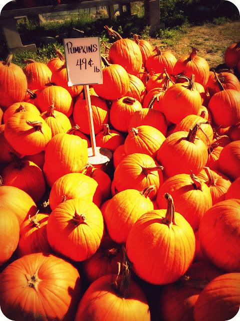 New England Pumpkins