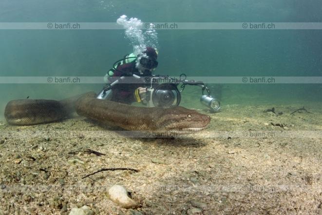 Giant underwater snake - photo#17