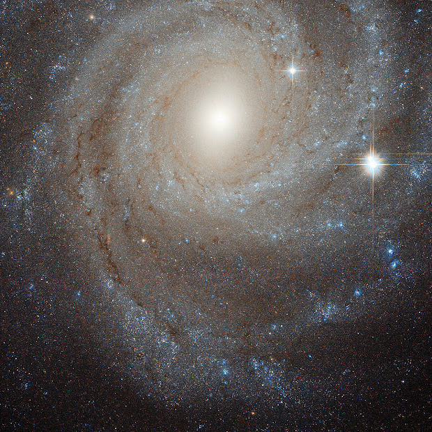 Intermediate Spiral Galaxy NGC 3344