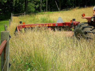 mowing hayfield 2