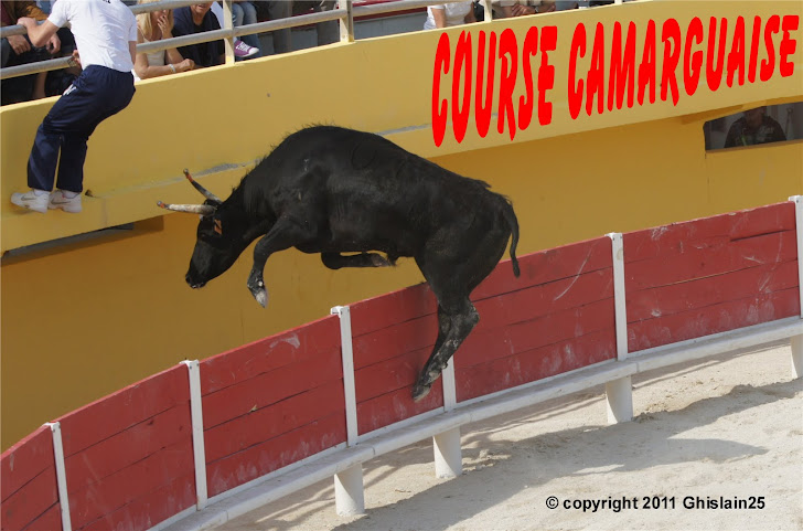 Course Camarguaise