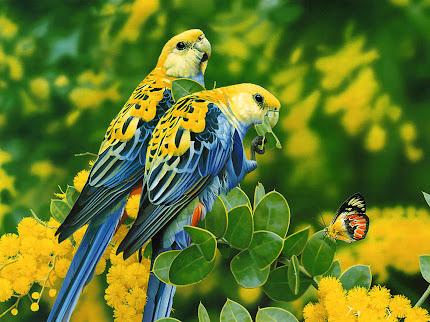 gambar burung romantis, burung saling cinta
