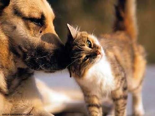 Photo d'un chaton avec un chien