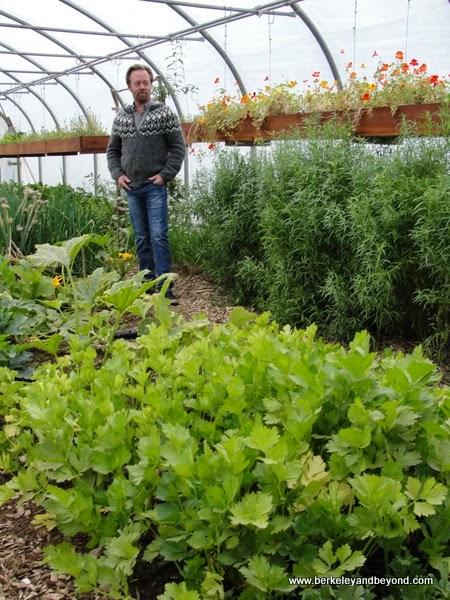 Vallanes Farm greenhouse in Iceland
