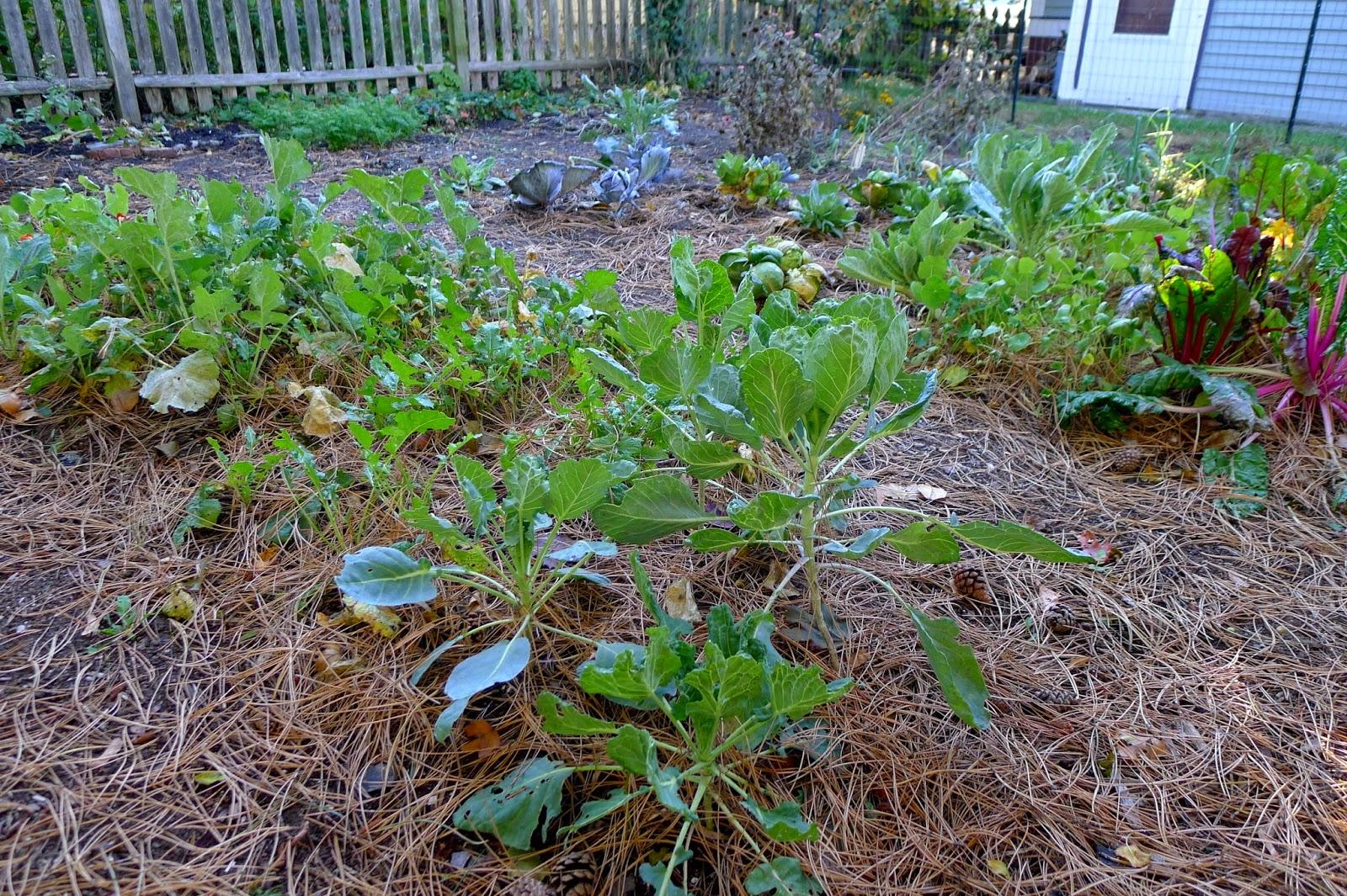 Less Noise, More Green, back yard garden November 2014