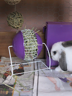 Pet Smart Rabbit Toys