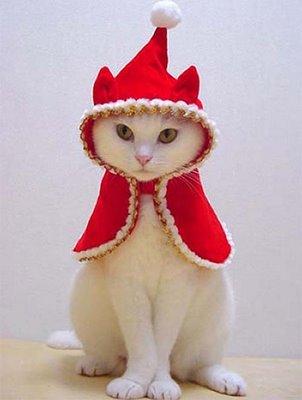 funny animals funny christmas animal
