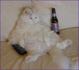 Gato no sofá a beber cerveja e a ver televisão