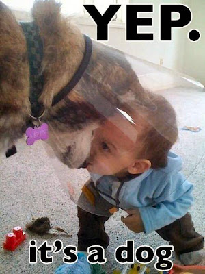 Yep, it's a dog. Toddler investigating a dog wearing a head cone.