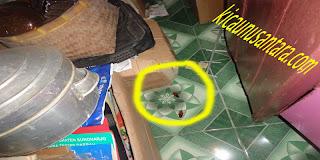 obat pembasmi kecoak manjur, obat serannga mujarap, cara mengatasi kecoak